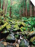 Rainforest in Sol Duc Rain Forest, Olympic National Park, Washington Prints by John Elk III