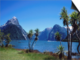 Cabbage Trees at Milford Sound with Mitre Peak in Background at Left Prints by Holger Leue