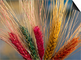 Tibetan Religious Offerings Made of Barley Wheat, Lhasa, Tibet, China Art by Keren Su