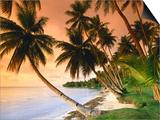 Paya Blue Lagoon Resort, Weno Centre, Micronesia Pósters por John Elk III