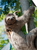 Sloth Living in Parque Centenario Prints by Margie Politzer