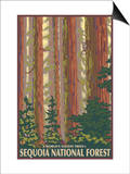 Sequoia National Forest, CA Redwood Trees Posters by  Lantern Press