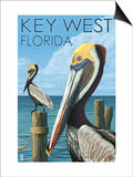 Key West, Florida - Brown Pelican Art by  Lantern Press