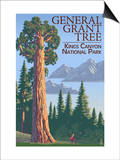 General Grant Tree - Kings Canyon National Park, California Posters by  Lantern Press