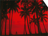 Cyclist and Palm Trees Silhouetted Against Red Sky at Sunset in Midigama, Southern, Sri Lanka Prints by Mark Daffey