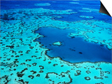 Aerial of Heart-Shaped Reef at Hardy Reef, Near Whitsunday Islands Posters by Holger Leue
