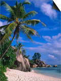 Palm Tree on Beach, Anse Source D'Argent, Seychelles Posters by Ralph Lee Hopkins