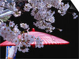 Red Umbrella and Cherry Blossoms, Kyoto, Japan Posters by Frank Carter