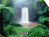 Millaa Millaa Falls Posters by Paul Dymond