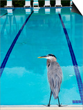 Heron at Pool Print by Thomas Winz