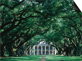 Oak Alley Plantation in Mississippi River Valley Posters by John Elk III