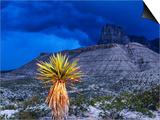 Yucca with Thunderstorm in Background, Guadalupe Mountains National Park, Texas Poster by Holger Leue
