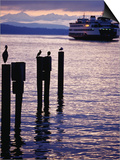 Wa State Ferry Coming in to Dock, Seattle, Washington, USA Prints by Lawrence Worcester