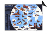 1987 Pinnipeds Around the World Map Posters by  National Geographic Maps