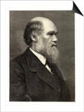 Charles Darwin Naturalist Posters