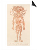 The Arteries of the Human Body Posters by Ebenezer Sibly