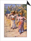 Jamaican Banana Plantation Prints