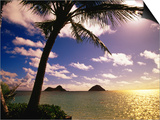 Palm Trees on the Beach at Sunset, Lanikai, U.S.A. Art by Ann Cecil