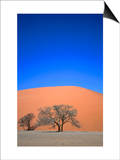 Tree and Sand Dune, Namib Desert Park, Namibia Pósters por David Wall