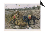 Two Red Cross Rescue Dogs a German Shepherd Prints by Louis Agassiz Fuertes