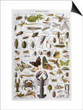 Arthropods Including a Wide Variety of Insects Print
