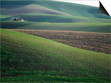Rolling Hills and Ploughed Field in Spring, Palouse, U.S.A. Prints by Ann Cecil
