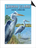 Kiawah Island, South Carolina - Blue Herons Posters by  Lantern Press