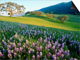 Carmel Valley in Spring Posters por Douglas Steakley
