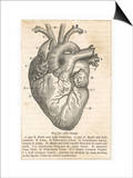 Anatomy of the Heart Prints