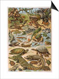 An Amazing Illustration Covering the Whole Range of Reptilian Species from Snakes to Newts Prints