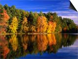Autumn Trees in New Hampshire, New Hampshire, USA Prints by Carol Polich