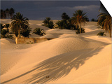 Palm Trees and Sand Dunes, Douz, Tunisia Print by Wayne Walton