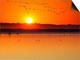 Migratory Birds Print by Marco Carmassi