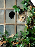 Tabby Tortoiseshell in an Ivy-Grown Window of a Deserted Victorian House Posters by Jane Burton