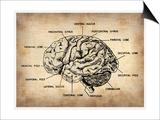 Vintage Brain Map Anatomy Print by  NaxArt