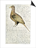 Sketch by William Clark of Cock of the Plains in the Lewis and Clark Expedition Diary Art