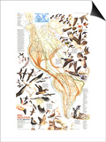 1979 Bird Migration in the Americas Map Prints by  National Geographic Maps