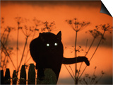 Black Domestic Cat Silhouetted Against Sunset Sky, Eyes Reflecting the Light, UK Posters by Jane Burton