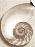 Sea Shell Posters by Doug Chinnery