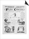 Broadsheet Advertising Professor Likonti's Romanian Flea Circus During Visit to London Print