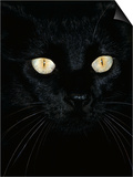 Black Domestic Cat, Eyes with Pupils Closed in Bright Light Prints by Jane Burton