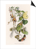 Feasting and Fun Among the Fuchsias, Fairies and Elves are Visited by Butterflies Prints by Richard Doyle