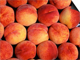Peaches (Prunus Persica) Europe Prints by  Reinhard