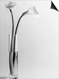 Calla Lilies in Vase Posters by Howard Sokol