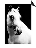 White Horse Print by Tim Lynch