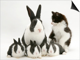 Blue Dutch Rabbit and Four 3-Week Babies and Black-And-White Kitten Posters by Jane Burton
