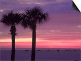 Palm Trees at Dusk, St. Petersburg Beach Poster by Jeff Greenberg