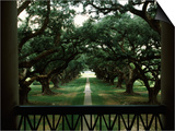 Oak Trees in Front of a Mansion, Oak Alley Plantation, Vacherie, Louisiana, USA Print