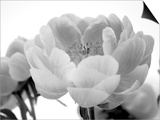Delicate Blossom I Art by Nicole Katano