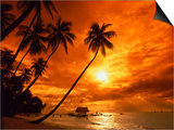 Sunset at Pigeon Point, Tobago, Caribbean Prints by Terry Why